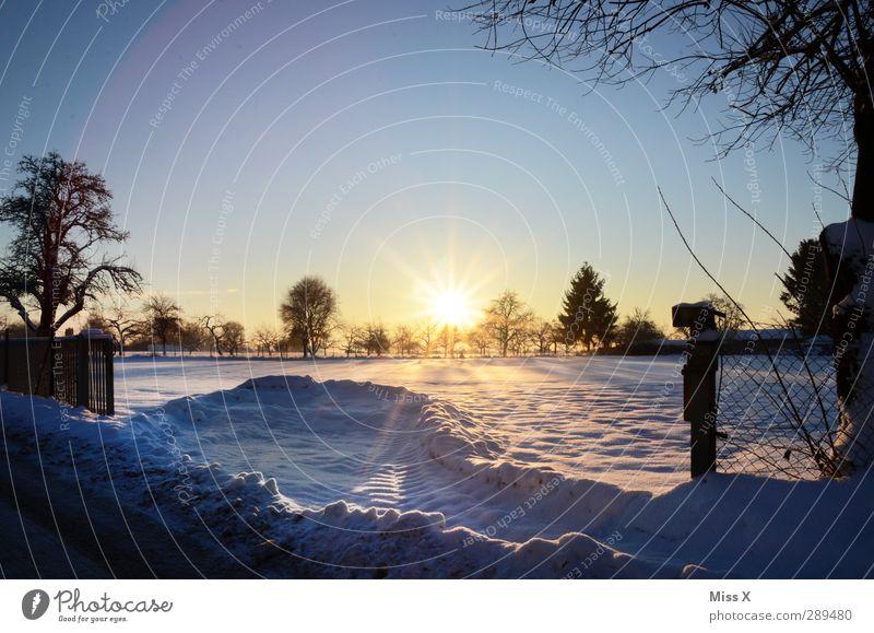 Winter Landschaft Schönes Wetter Eis Frost Schnee Baum Garten Park kalt weiß Schneelandschaft Farbfoto mehrfarbig Außenaufnahme Menschenleer Textfreiraum oben