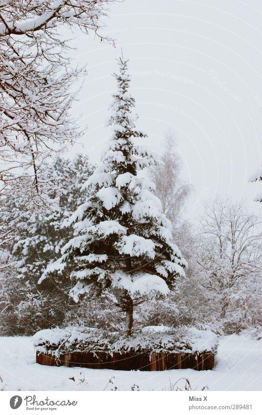 Winter Eis Frost Schnee Baum Garten Park kalt weiß Tanne Farbfoto Gedeckte Farben Außenaufnahme Menschenleer