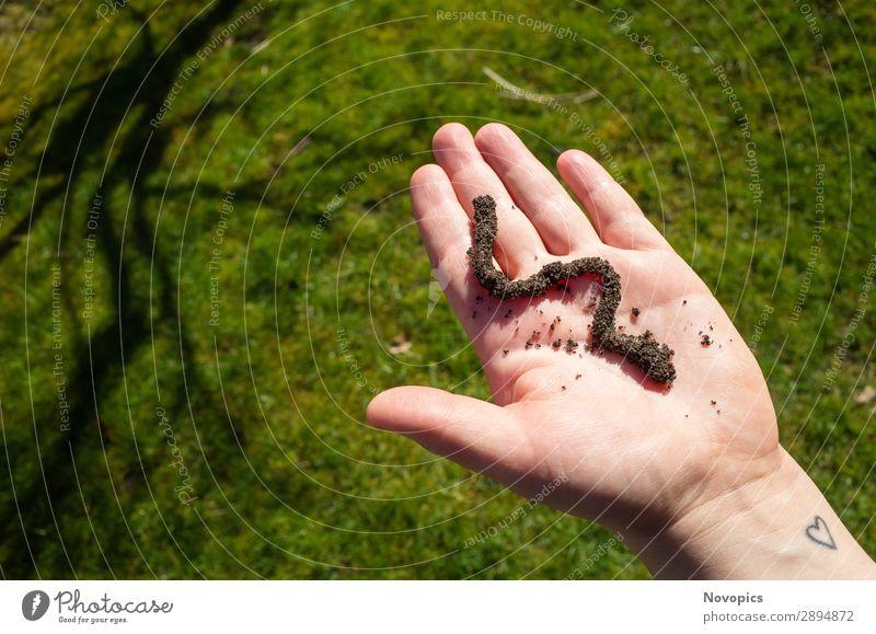 Earthworm On A Hand Gemüse Mensch Pflanze Erde Tier Wildtier Wurm 1 beobachten berühren nachhaltig braun grün Urban Gardening Anbau cultivation Gemüsebau