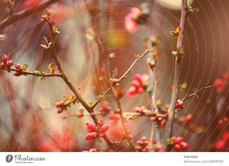 _ Umwelt Natur Pflanze Frühling Sommer Sträucher Blüte Garten Park Blühend Wachstum schön rosa Stimmung Frühlingsgefühle Optimismus ästhetisch Zufriedenheit