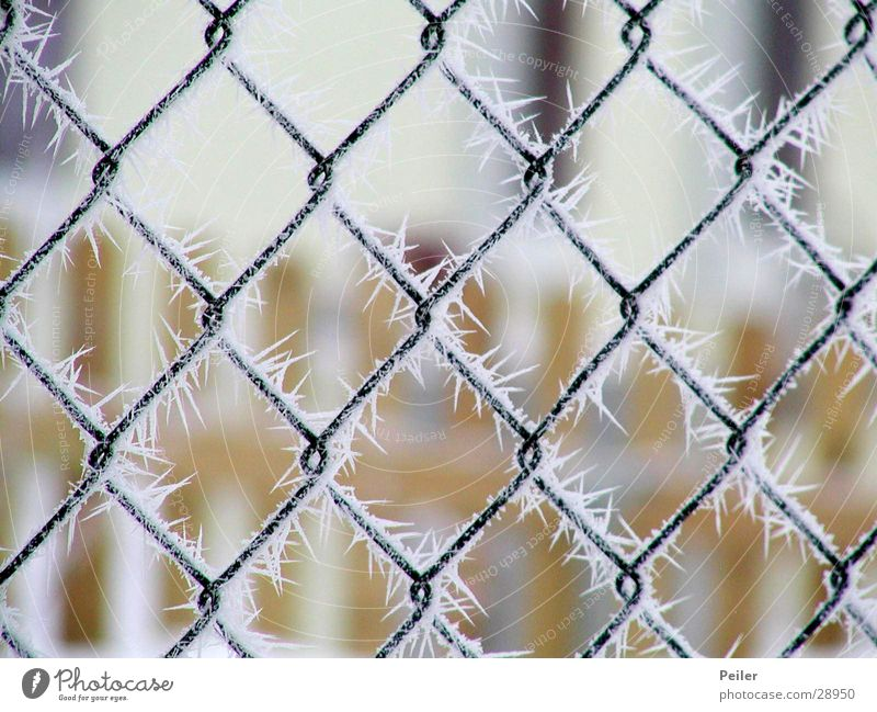 Winterpoesie aus Kristall weiß schwarz kalt Schnee Eis orange Frost gefroren frieren Zaun Tiefenschärfe Kristallstrukturen Gitter Eiskristall netzartig