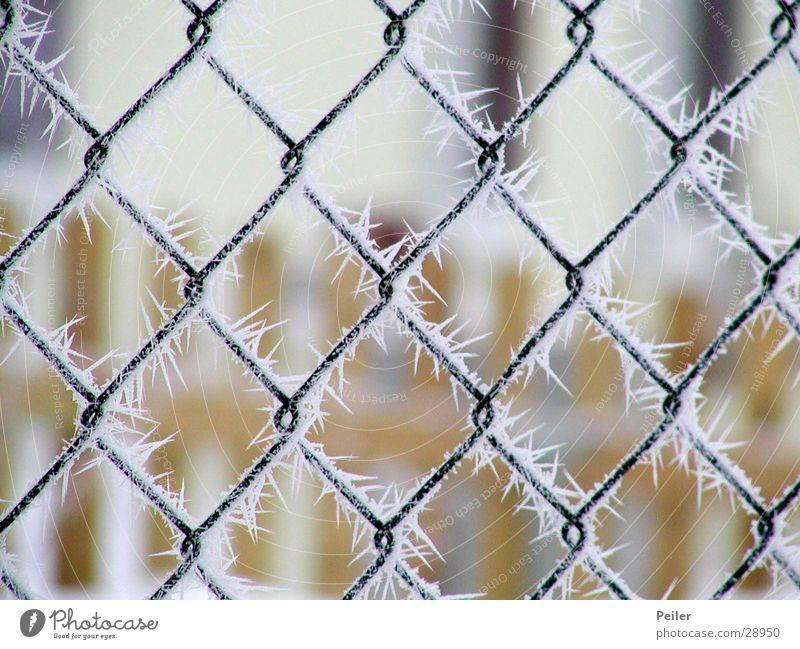 Winterpoesie aus Kristall weiß Winter schwarz kalt Schnee Eis orange Frost gefroren frieren Zaun Tiefenschärfe Kristallstrukturen Gitter Eiskristall netzartig