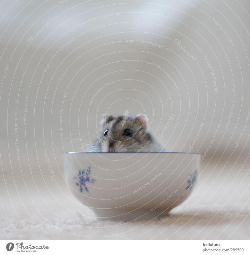 Karlis Arche | Weltuntergang Tier Haustier Fell 1 sitzen blau grau schwarz weiß Tasse Hamster Zwerghamster hockend Farbfoto Gedeckte Farben mehrfarbig