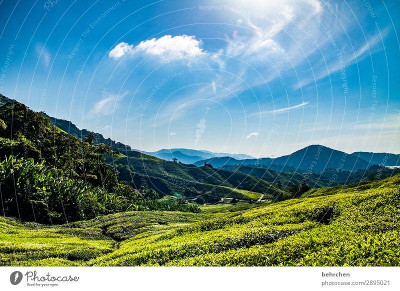 motivationstee Urwald Regenwald Malaysia cameron highlands Tee Teepflanze Teeplantage weite Ferne Fernweh reisen Ferien & Urlaub & Reisen Tourismus Ausflug