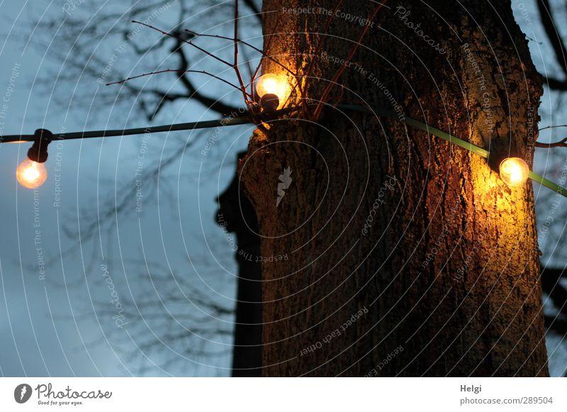 Weltuntergang | der Letzte macht das Licht aus... Himmel Natur blau Pflanze Baum Einsamkeit Winter ruhig gelb Umwelt dunkel Lampe Stimmung braun außergewöhnlich