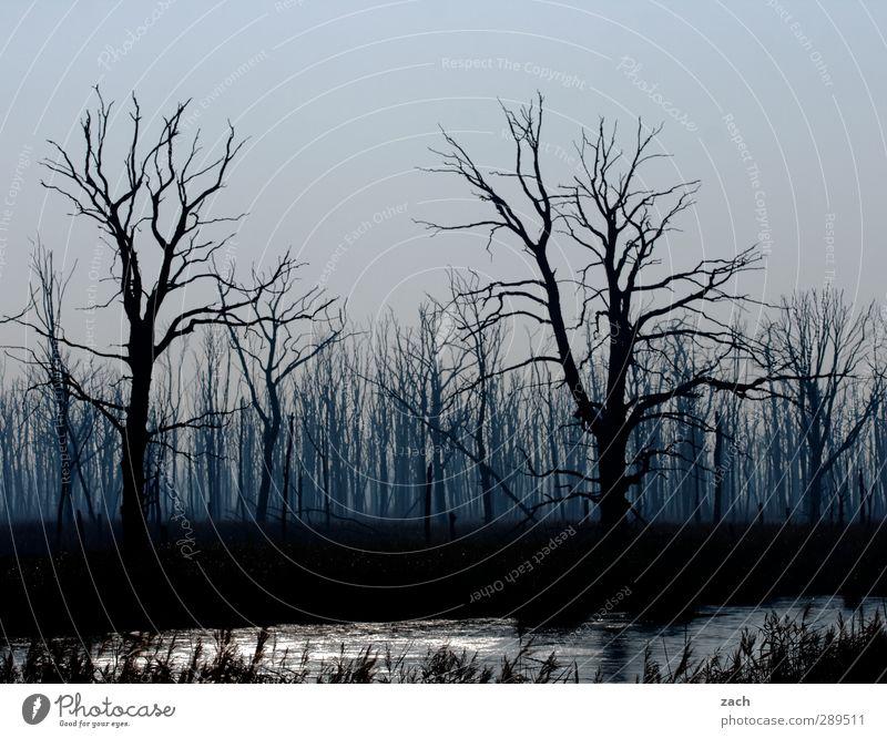 Weltuntergang | Mordor... Umwelt Natur Pflanze Herbst Winter schlechtes Wetter Nebel Regen Regenwasser Baum Baumstamm Wald Holz bedrohlich dunkel blau schwarz