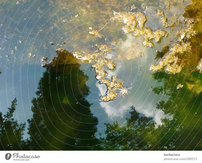 Weltuntergang | Versunkenes Europa Himmel Natur blau grün Wasser Pflanze Baum Wolken Umwelt See Blüte Park gold glänzend leuchten einzigartig