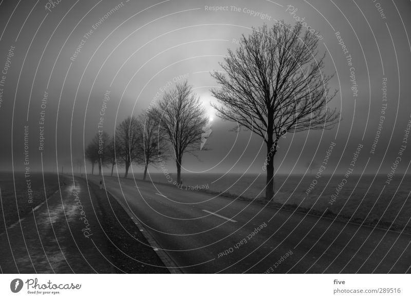 weltuntergang | ich fahr dann mal los... Natur Landschaft Himmel Wolken Sonne Herbst Wetter schlechtes Wetter Nebel Pflanze Baum Gras Wiese Feld Verkehr Straße