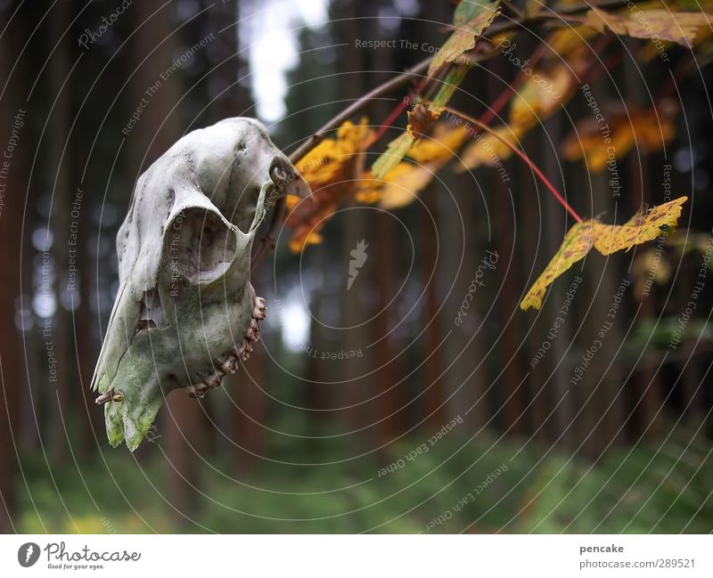 weltuntergang | ewige jagdgründe Natur Tier Landschaft Wald nackt Herbst Tod Gefühle Erde träumen Wildtier Hoffnung Zeichen Trauer Ewigkeit Tiergesicht