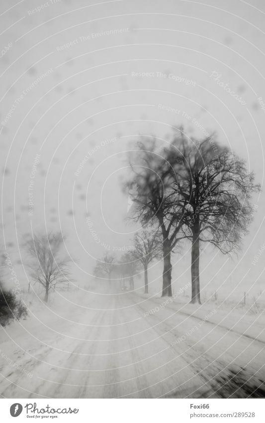 Weltuntergang/ Es begann mit Schneesturm Himmel weiß Baum Einsamkeit Winter Landschaft schwarz dunkel kalt Straße Schneefall Stimmung Eis Wind bedrohlich