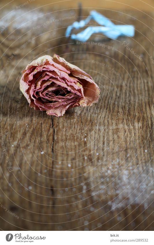 Rose schön Blume Holz Blüte Feste & Feiern braun rosa Geburtstag Dekoration & Verzierung Hochzeit trocken Kitsch Holzbrett Blütenknospen Nostalgie