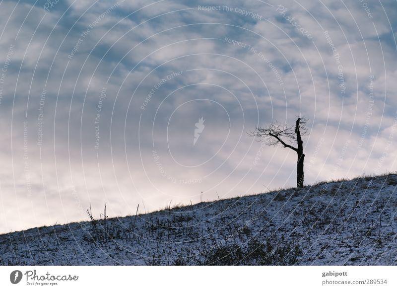 Weltuntergang | Y Umwelt Natur Landschaft Pflanze Urelemente Erde Himmel Wolken Horizont Wetter Eis Frost Baum wild blau violett Tod unbeständig Einsamkeit