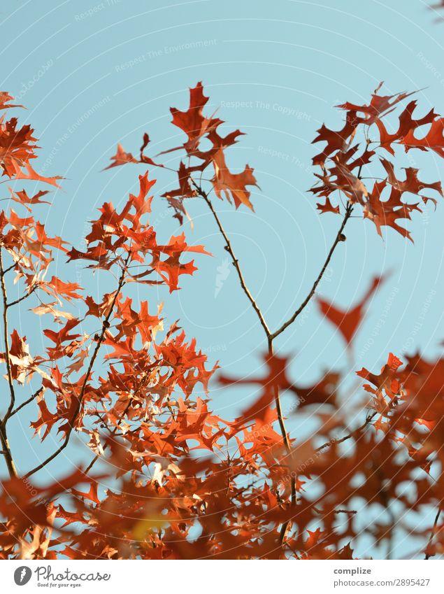 Es wird Herbst! Ferien & Urlaub & Reisen Berge u. Gebirge wandern Umwelt Natur Himmel Sonne Klima Klimawandel Pflanze Baum Blatt Garten Park Wald exotisch blau