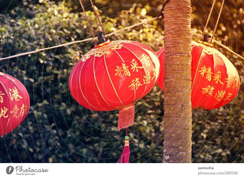 Laternenfest Ferne Feste & Feiern Silvester u. Neujahr Jahrmarkt Kultur Veranstaltung Park hängen leuchten ästhetisch hell rot Lampion China Chinatown