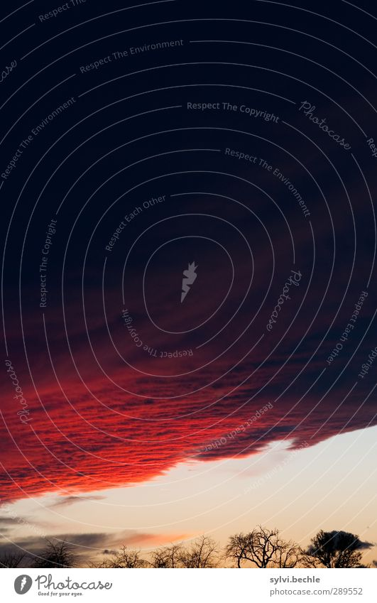 Weltuntergang | Das letzte bisschen Farbe Umwelt Natur Landschaft Pflanze Himmel Wolken Gewitterwolken Nachthimmel Sonnenaufgang Sonnenuntergang Sonnenlicht