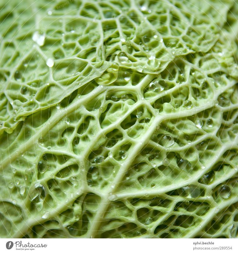 Weltuntergang | ?Ihr wollt mich wohl verkohlen? grün Pflanze Blatt Leben Herbst Gesunde Ernährung Essen Lebensmittel nass Wassertropfen Gemüse lecker