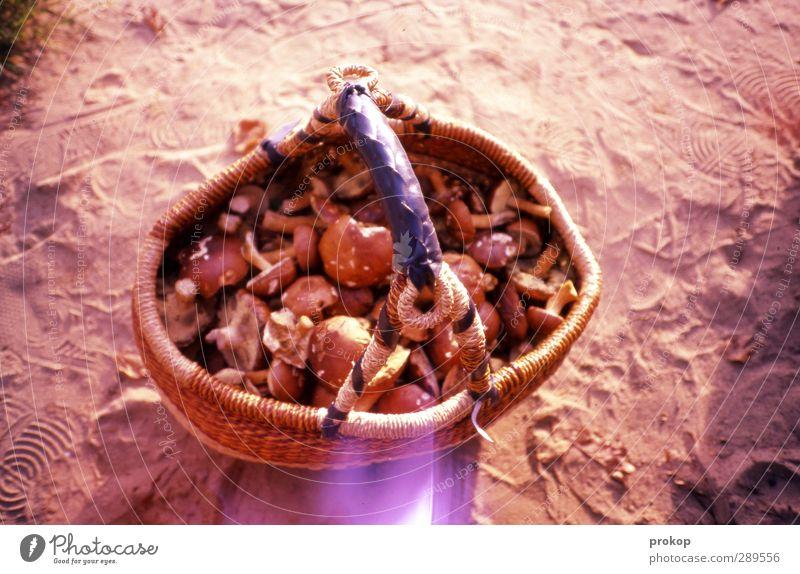Fette Beute Umwelt Natur viele anstrengen Leistung Stolz Pilz ansammeln voll Korb Herbst Sand Gesundheit Vegetarische Ernährung Lebensmittel Ernte Farbfoto