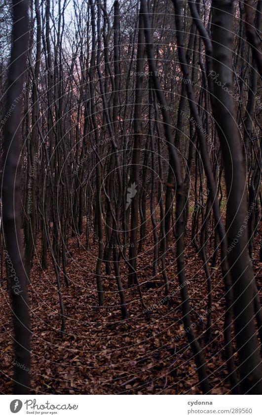 Weltuntergangsstimmung Natur Baum Blatt Einsamkeit ruhig Wald Umwelt dunkel kalt Herbst Leben Wege & Pfade Angst Abenteuer ästhetisch Wandel & Veränderung