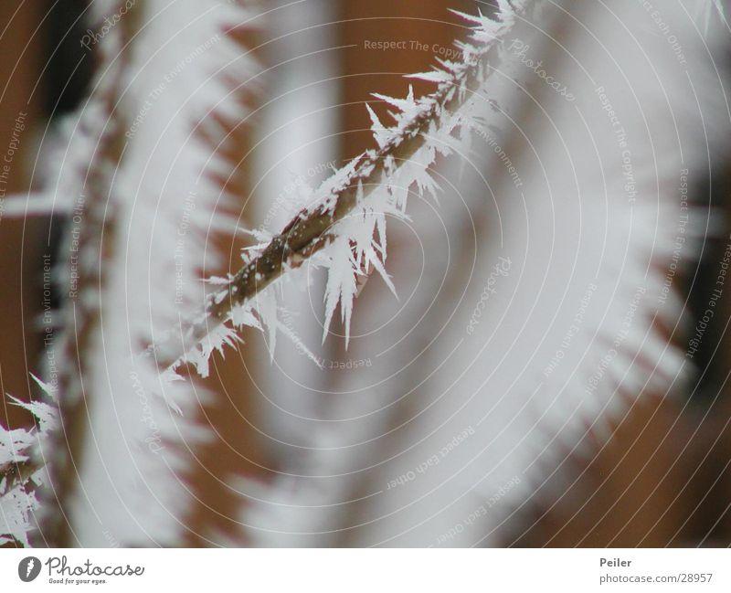 Winterstrauch am Morgen weiß kalt Schnee Eis braun Kristallstrukturen Eiskristall