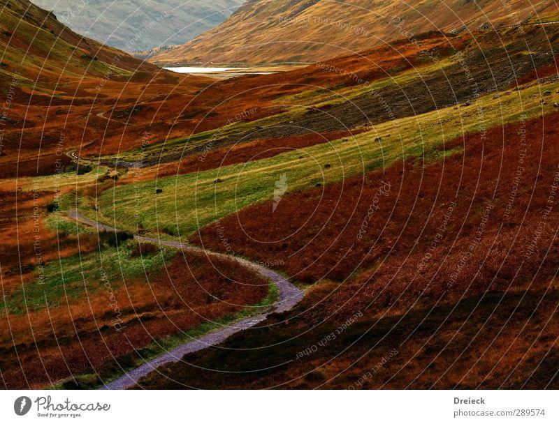 highland path Berge u. Gebirge wandern Umwelt Natur Landschaft Herbst Hügel Schlucht Schottland Menschenleer braun gelb gold grün orange rot schwarz Farbfoto