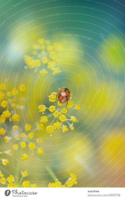 frühlingsmarienkäferchen Blume Blüte Natur Garten draußen Frühling Sommer Wellness Außenaufnahme Pflanze Kraut Dill schön Insekt Käfer Glücksbringer Ostern