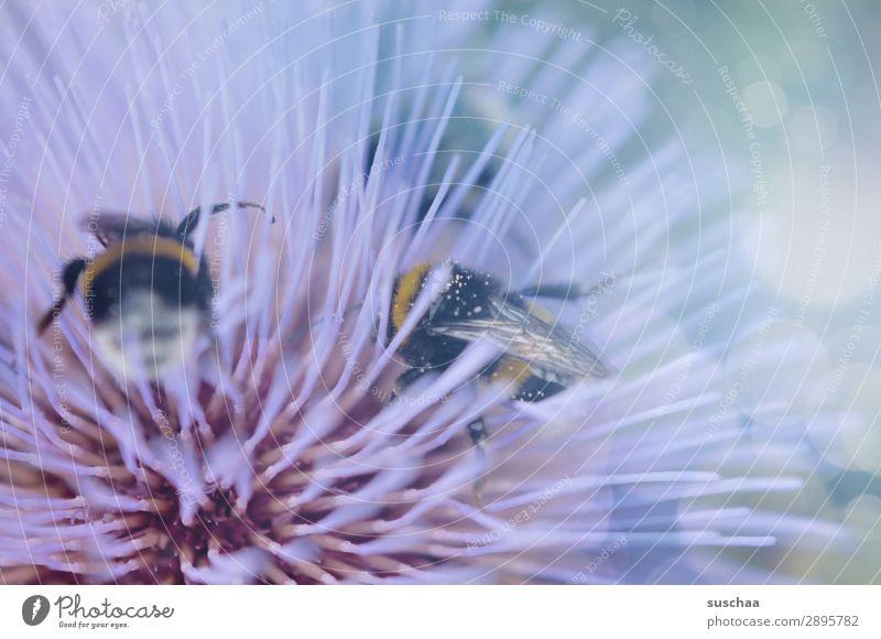 *summsumm* Frühling Sommer warm draußen Pastellfarben Pflanze Blume Blüte Insekt Biene Hummel Ernte stachelig soft krabbeln Nektar Umwelt Natur Nutztier Garten