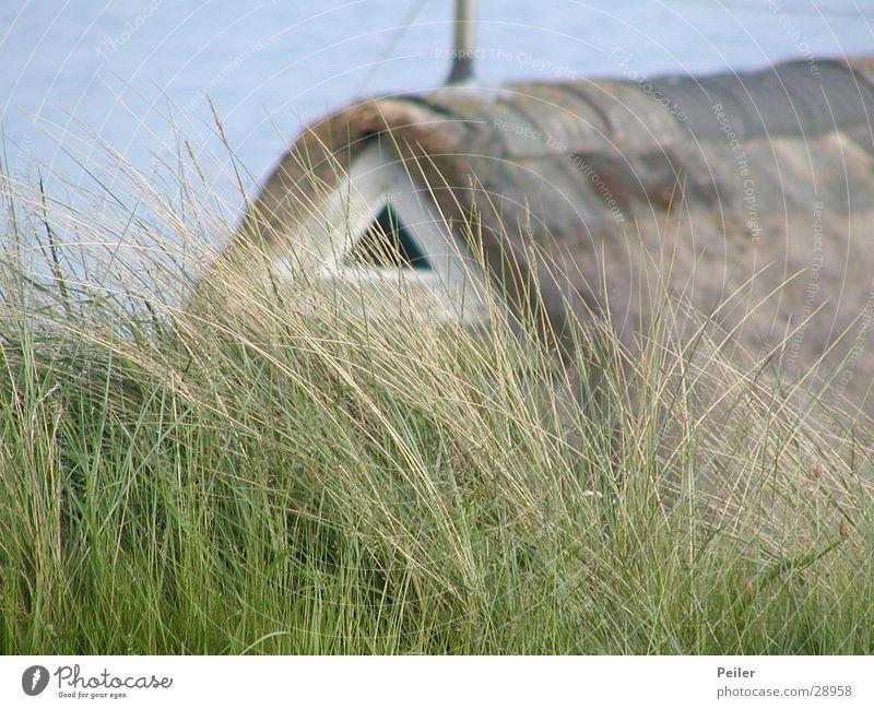 Reetdachhaus auf Sylt Natur grün blau Haus Gras braun Europa Schilfrohr Nordsee Dach