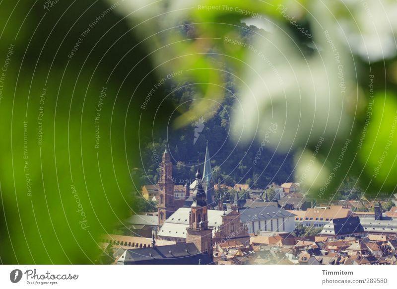 Ach nee, doch nicht| Aus der Deckung heraus grün Stadt Pflanze Blatt Umwelt Gefühle Zufriedenheit Kirche Studium einfach Wein Heidelberg