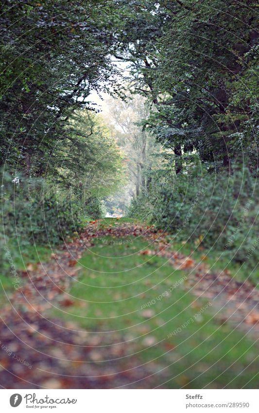 Der Tag danach | Neue Wege gehen? Weg ins Licht Waldweg Pfad Fußweg Herbstwald Blätterdach Waldstimmung Spazierweg Waldspaziergang Waldrand dunkelgrün