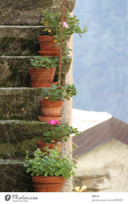 Ach nee, doch nich | alles nur minimal verrutscht Ferien & Urlaub & Reisen Tourismus Berge u. Gebirge Haus Umwelt Pflanze Blatt Blüte Topfpflanze Dorf Hütte