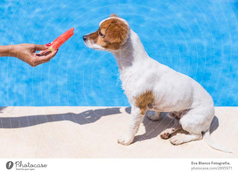 Frau, die ihrem Hund Wassermelone gibt. Hintergrund des Swimmingpools. Frucht Diät Freude Schwimmbad Ferien & Urlaub & Reisen Sommer Sommerurlaub Sonne Mensch