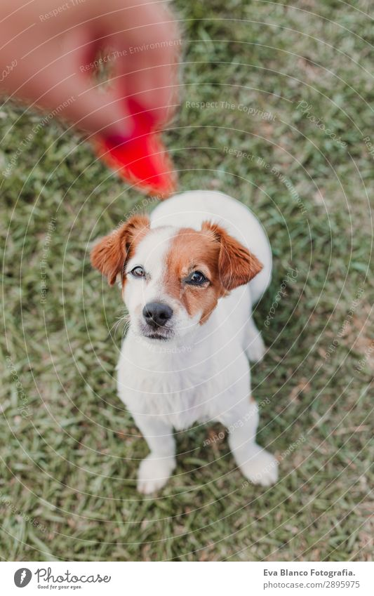 Frau Mensch Natur Hund Jugendliche Junge Frau Sommer schön grün weiß rot Hand Erholung Tier Freude Erwachsene