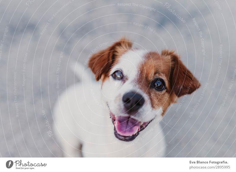 Hund Sommer schön weiß Tier Freude schwarz Lifestyle lustig klein Spielen Freundschaft elegant Lächeln sitzen Fröhlichkeit