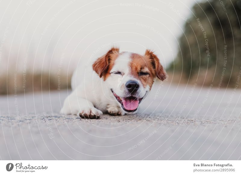 Himmel Hund Sommer schön weiß Tier Freude schwarz Lifestyle Erwachsene lustig Glück klein Spielen Freundschaft Feld