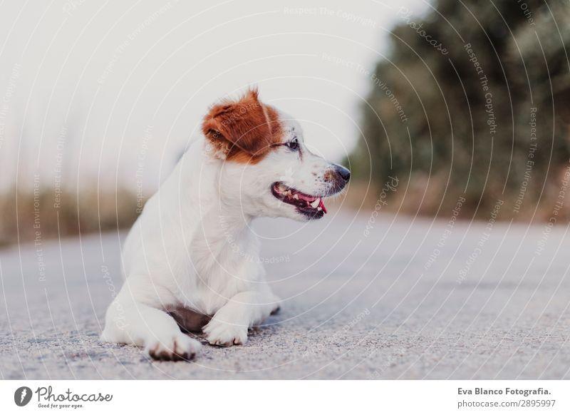 Hund Sommer schön weiß Tier Freude schwarz Lifestyle Erwachsene lustig Glück klein Spielen Freundschaft elegant Lächeln
