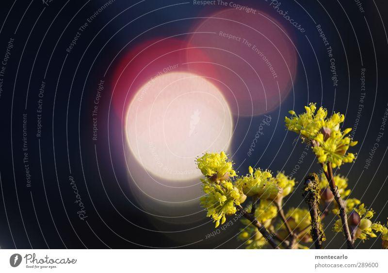 der tag danach | LICHT Umwelt Natur Pflanze Himmel Sonne Sonnenlicht Schönes Wetter Sträucher Grünpflanze Wildpflanze authentisch einfach hell einzigartig