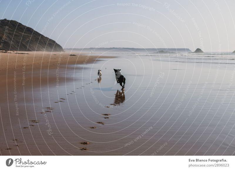 Ferien & Urlaub & Reisen Natur Hund Sommer blau schön weiß Sonne Meer Erholung Tier Freude Strand Lifestyle Küste Glück