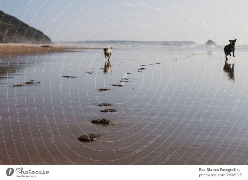 Ferien & Urlaub & Reisen Natur Hund Sommer blau schön weiß Sonne Meer Erholung Tier Freude Strand Lifestyle Wärme Küste