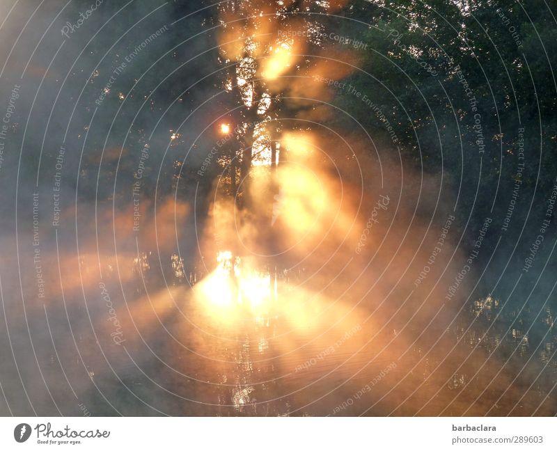 Der Tag danach   ...und immer wieder geht die Sonne auf Wasser Sonnenaufgang Sonnenuntergang Sonnenlicht Herbst Nebel Seeufer Teich leuchten fantastisch