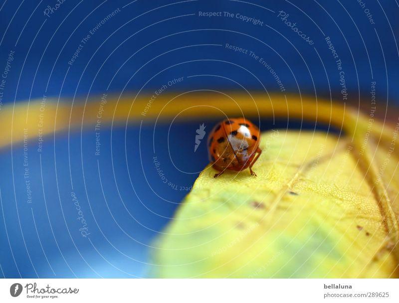 Ach nee, doch nich - der Tag danach | Glück gehabt! Umwelt Natur Sonnenlicht Wetter Schönes Wetter Pflanze Blatt Garten Park Wiese Feld Wald Tier Wildtier Käfer