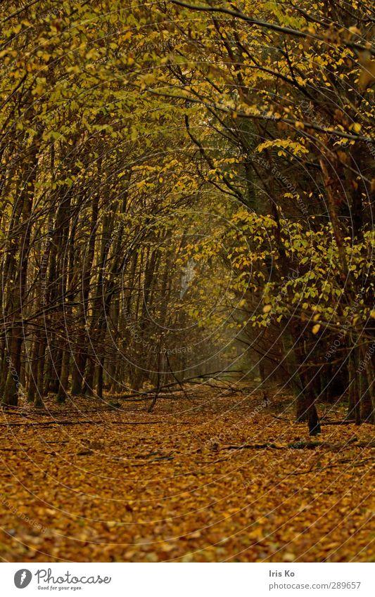 blätterweg wandern Natur Landschaft Pflanze Herbst schlechtes Wetter Baum Blatt Wald atmen verblüht natürlich unten weich braun gelb gold grün Stimmung ruhig