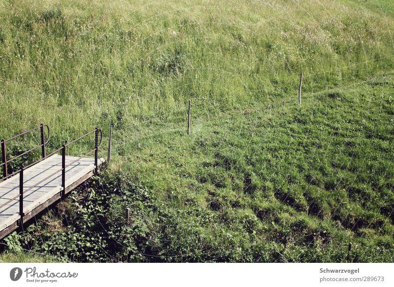 Wanderlust wandern Umwelt Natur Landschaft Pflanze Schönes Wetter Gras Sträucher Wiese Hügel Zufriedenheit Erholung erleben Freiheit Freizeit & Hobby