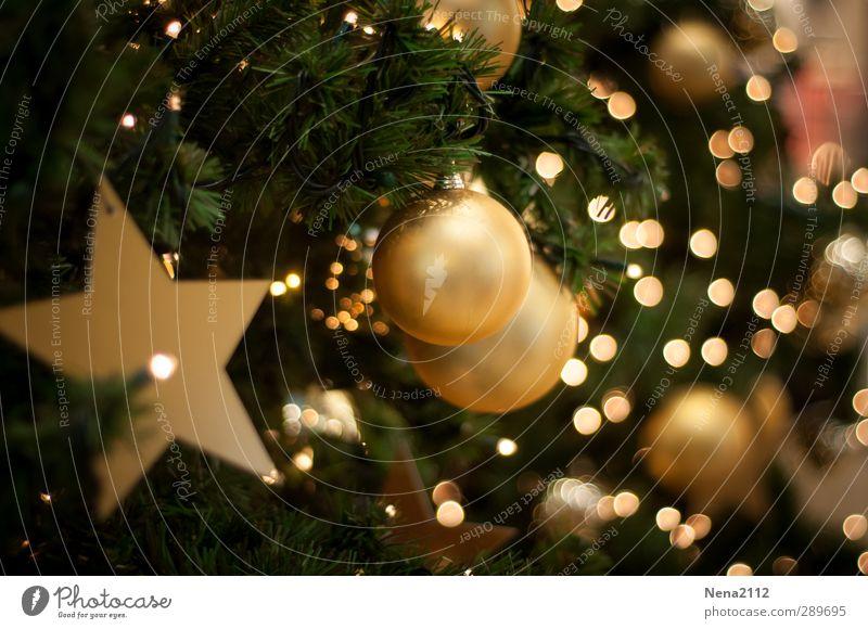 Frohe Weihnachten! :) elegant Winter Wohnzimmer Feste & Feiern Weihnachten & Advent gold grün Tanne Weihnachtsbaum Weihnachtsdekoration Weihnachtsstern