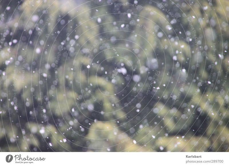 Frohe Weihnachten, Photocase! Natur Ferien & Urlaub & Reisen weiß Baum Freude Winter Wald Umwelt Schnee Bewegung Gesundheit Garten Schneefall Wetter Park