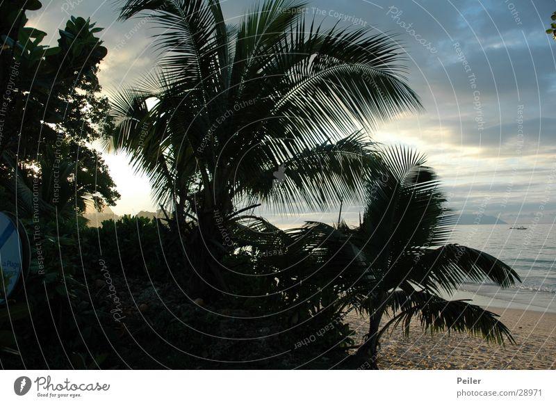 Seychellen-Palmen at dawn Sonnenuntergang Abenddämmerung Urwald Kokospalme