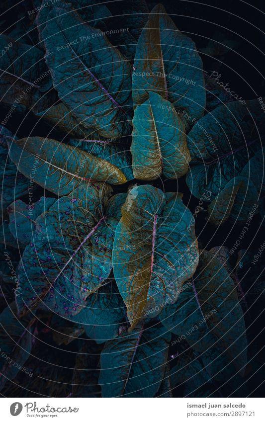 grüne Pflanze hinterlässt Textur im Frühjahr Blatt Garten geblümt Natur Dekoration & Verzierung abstrakt Konsistenz frisch Außenaufnahme Hintergrund neutral