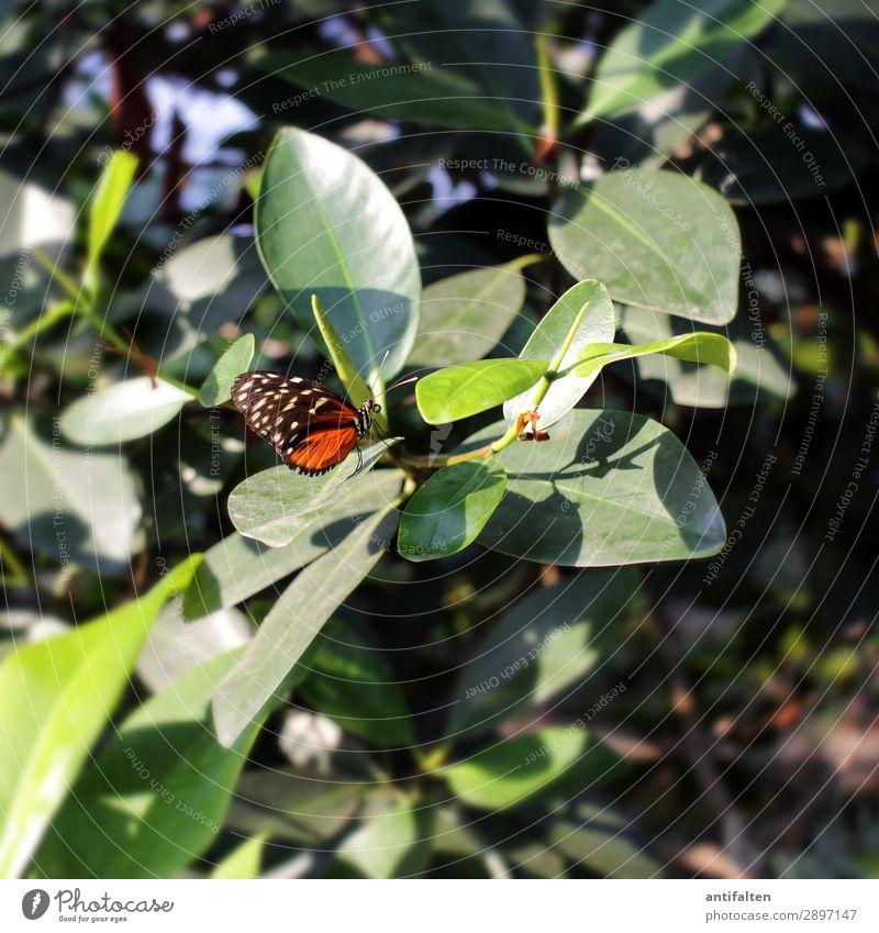 beautiful little butterfly Ferien & Urlaub & Reisen Natur Sommer Pflanze schön Tier Blatt Umwelt Blüte Tourismus Freiheit orange fliegen Ausflug Geburtstag