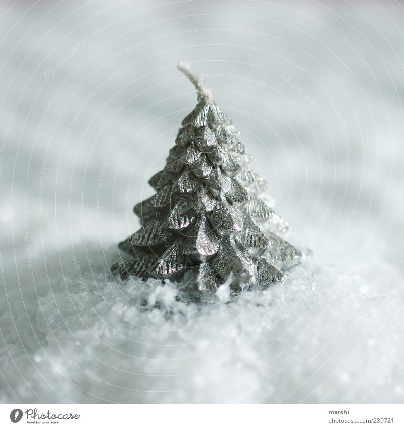 weiße Weihnacht Winter Baum Weihnachten & Advent Schneefall Kerze Außenaufnahme Nahaufnahme Detailaufnahme