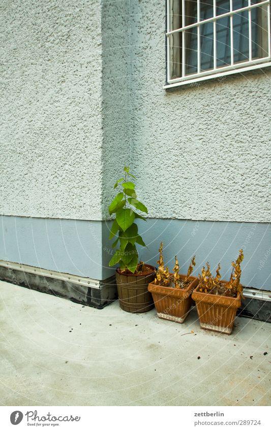 Blumentöpfe Herbst Pflanze Blatt Grünpflanze Nutzpflanze Topfpflanze Garten Haus Bauwerk Gebäude Architektur Mauer Wand Fenster Sehnsucht Heimweh Fernweh