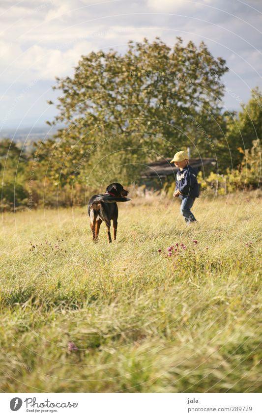 freundschaft Mensch maskulin Kind Junge 1 3-8 Jahre Kindheit Umwelt Natur Landschaft Himmel Schönes Wetter Pflanze Baum Gras Sträucher Wiese Tier Haustier Hund